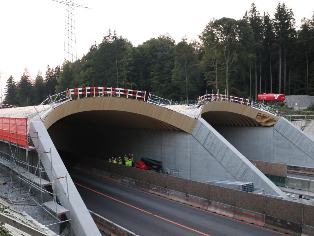 Wildtierbrücke in Schweizer Holz